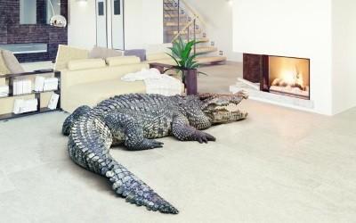 Договор аренды квартиры с животными