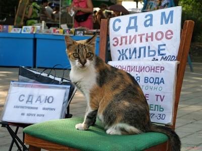 Изображение - Договор аренды квартиры на длительный срок образец Dolgosrochnaya-arenda-kvartiry-bez-dogovora